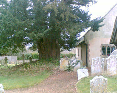 The Steep Yew, Hampshire Copyright© 2006 Tim Partridge